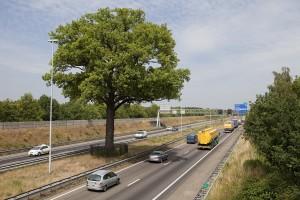 Autosloperij Breda verwirderd sloopauto´s op de A2 en A27
